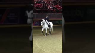 Leonard Cohen dressage Tribute