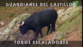 PGM 213 TOROS ESCALADORES LA CAROLINA