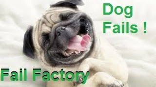 פיספוסי כלבים קורעים מצחוק, שווה צפייה !!