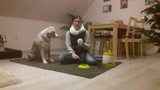 Produkttest: Trixie Memory Trainer   Strategiespiel   Hund lernt Buzzer drücken mit Futterautomat