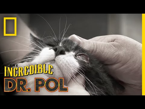 One Sly Cat | The Incredible Dr. Pol