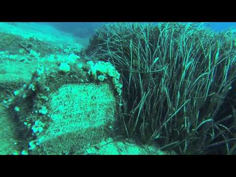 Scubamarine Freediving in Elba, Elba rund & Capraia,Italien