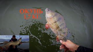 попали на жор ГИГАНТСКИХ Окуней. И + бонус огромная  ЩУКА  я и мечтать не мог о такой рыбалке.