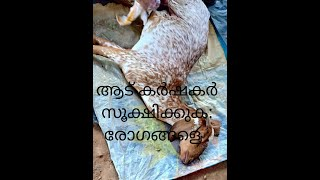 Goat Farm In Thrissur Part 4