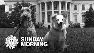 All the presidents' pets: JFK's canine détente