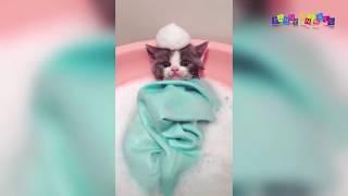 Прикольные, милые котята.