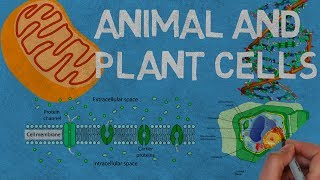 Animal and Plant Cells | What Are They? What is their functions?