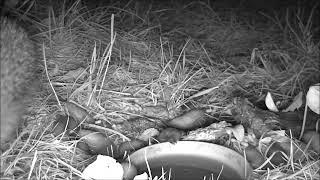 Wildlife Trail Camera - 10.7.2019