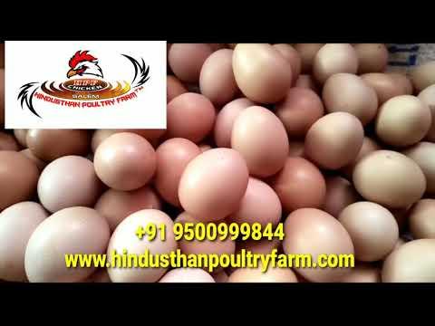 Country Chicken Egg