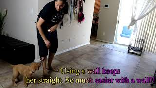 How to teach a puppy heel with a slip lead
