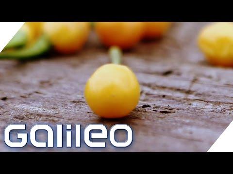 Die Gebärmutter der Chilli - Das teuerste Chili-Gewürz der Welt | Galileo Lunch Break