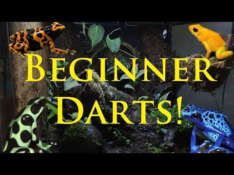 Best Beginner Dart Frogs!