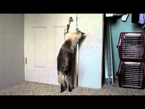 Amazing Cats opening doors (7 times 2 cats)