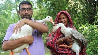 Village Food | Swan curry recipe | Big ducks curry | Grandmother recipes-51
