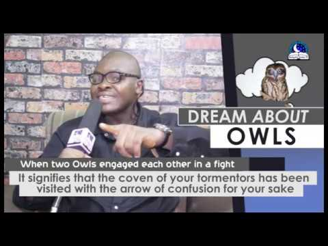 DREAM ABOUT OWLS I Find Out The Biblical Dream Meaning I
