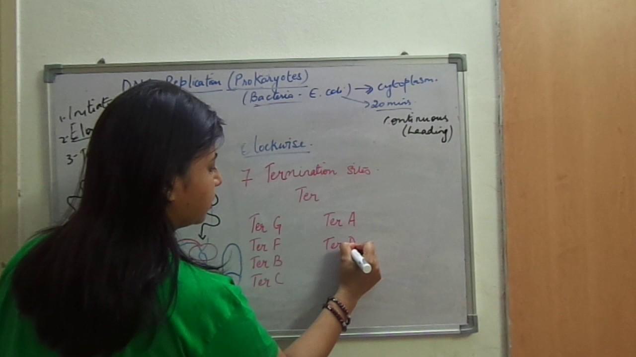 Termination Of Dna Replication In Prokaryotes