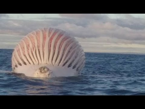 STRANGEST Things Found In The Ocean!