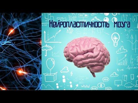 Нейропластичность мозга - Мозг изменяющий себя сам