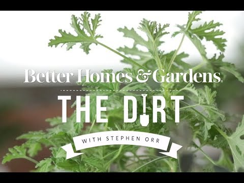 How to Propagate Houseplants | The Dirt | Better Homes & Gardens