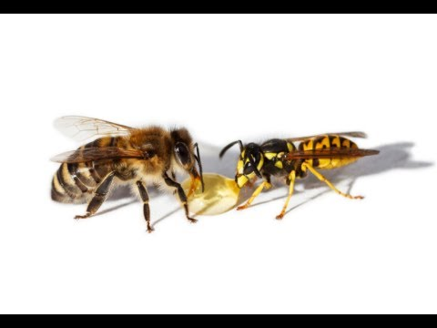 Video How to Treat Bee and Wasp Stings
