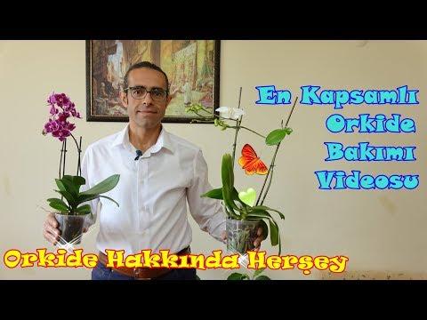 Orkide Çiçeği Bakımı (Çoğaltma, Budama, Sulama, Saksı Değişimi)
