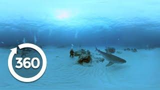 Understanding Sharks | Shark Week (360 Video)