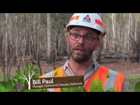 Going Bush - VicForests Community Forestry operations in western Victoria