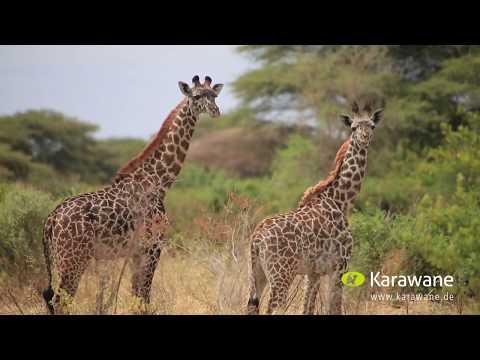 Karawane Reisen - Wir über uns in 30 Sekunden