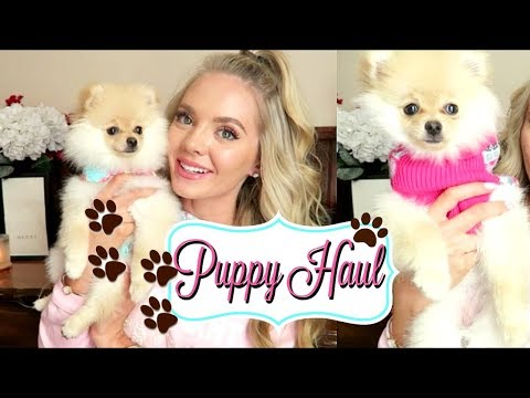 PUPPY HAUL | Clothes Toys Treats