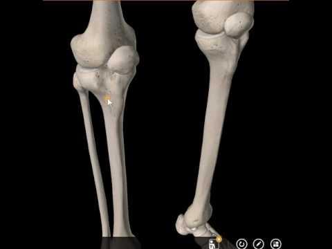 Wie sehr schmerzen das knieprothese, je...