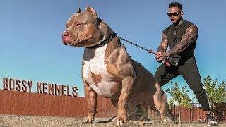 Эти Собаки Запрещены Во Всем Мире   Топ 8