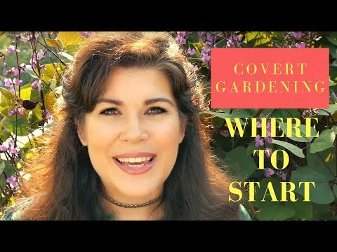 How to Begin Covert Gardening - Hyacinth Bean Plant