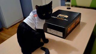 Ништяки для кота от LOOTCASE