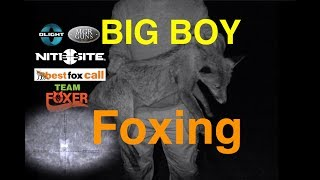 Big Boy Foxing With The .223's & Team Foxer