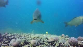 Как рыба клюет под водой