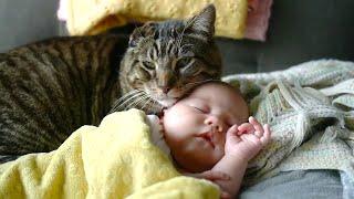 【감동】 고양이가 아기를 위험으로부터 보호합니다 2019 🐱🥰👶
