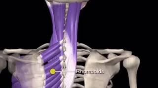 Perchè l'osteopata effettua una valutazione globale del corpo❓