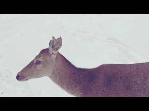 Le réveil du Parc polaire