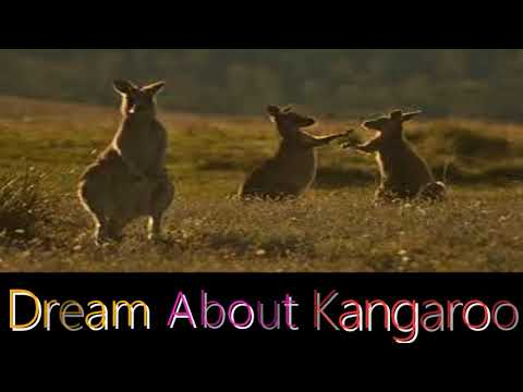 What does it mean when you have a dream about a  kangaroo