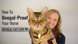 Bengal Cat Personality - How to Bengal Proof Your Home