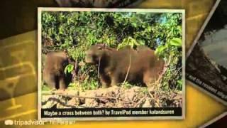 preview picture of video 'Capybaras and crocodiles in the Bolivian pampas  Katandsuren's photos around Rurrenabaque'
