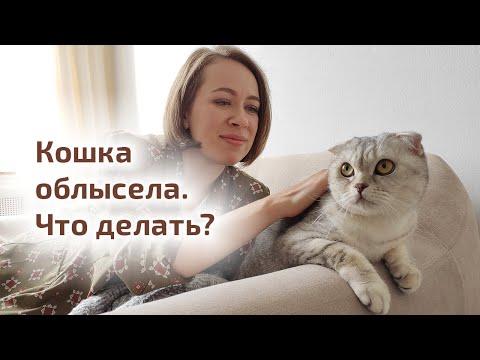 Облысение у кошки