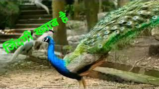 Pradeep Bhinde Zindagi Khwab Hai karaoke Mukesh ji