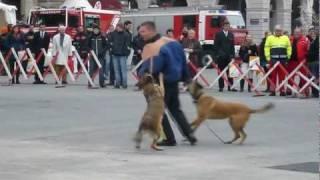 Polizeidiensthunde 2011 (Rathausplatz)