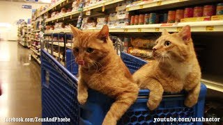 Cats Trained Off Leash Visit #PetSmart with Bonus Scene at Home
