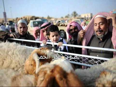 خروف بـ أربع قرون حاله نادرة سبحان الله