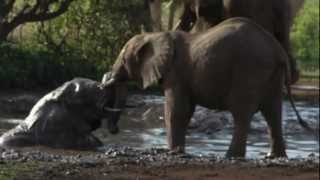 preview picture of video 'Elephants Play In Water Hole At Lake-Maniara.'