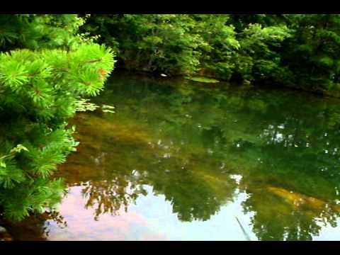 bass fishing: zara spook