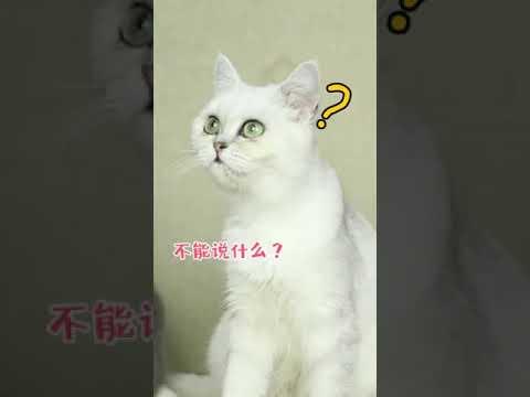 【抖音】寵物合集27 - 我從小的夢想,就是能有一隻自己的貓,雲吸貓祝你實現夢想!