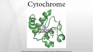 Enzymes - Cytochrome